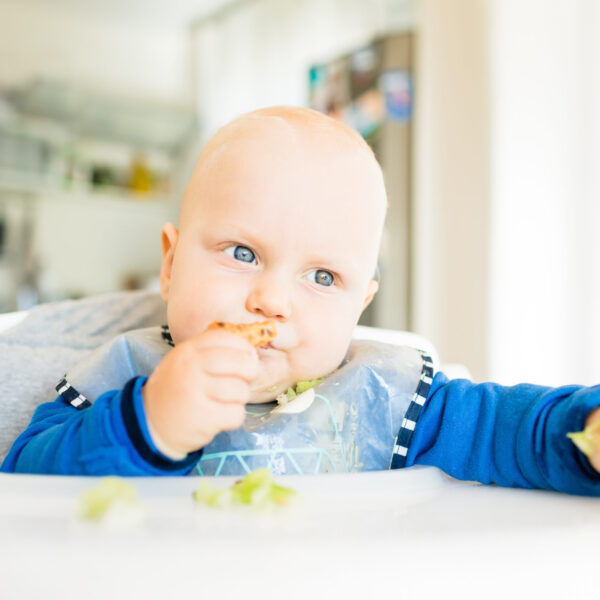 Baby boy eating bread and cucumber with BLW method, baby led weaning. Seriosu vegetarian kid eating lunch. Child eat himself, self-feeding.