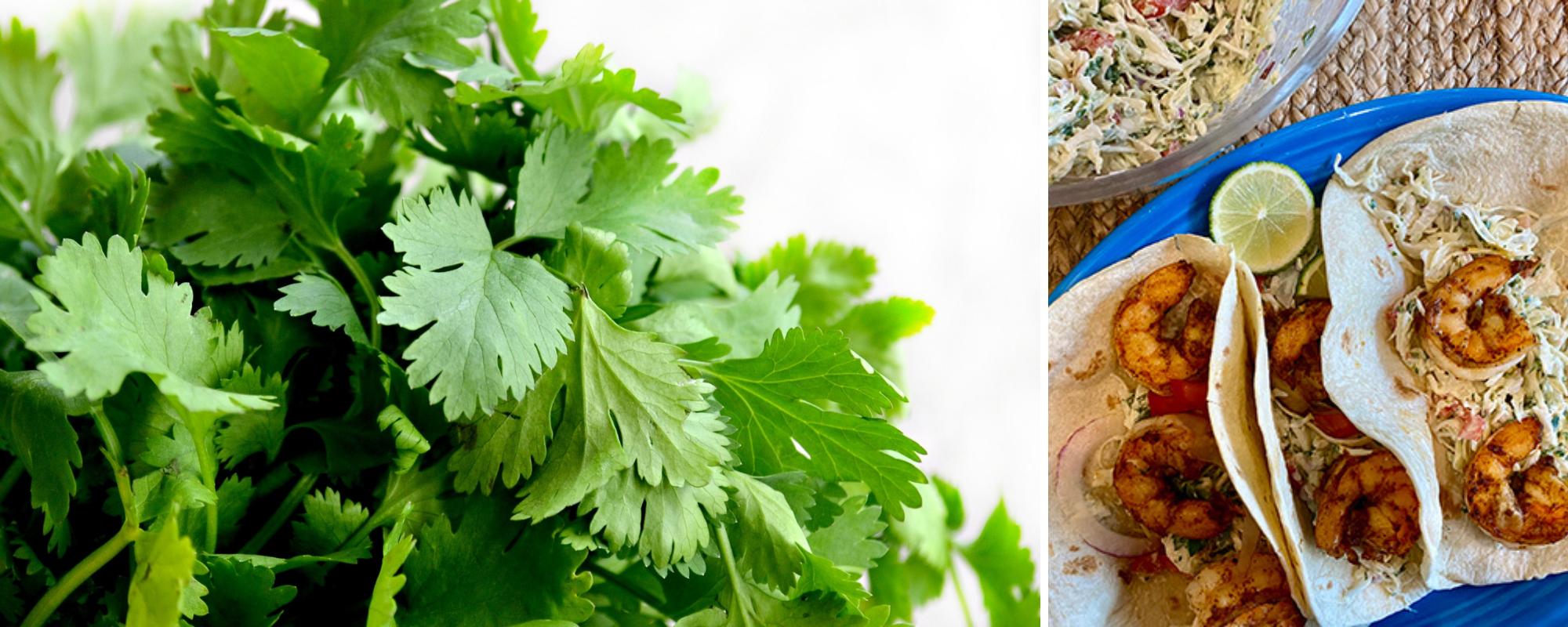 Shrimp tacos with cilantro lime slaw
