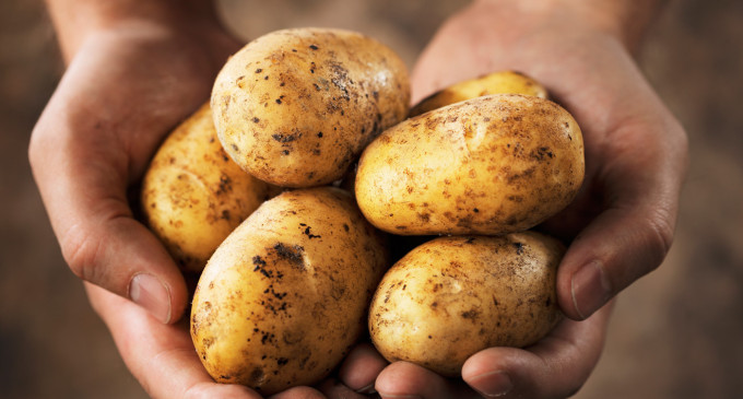 Australian man vows to eat Nothing but Potatoes for an Entire Year