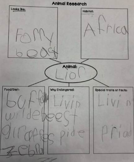 Animal Graphic Organizer
