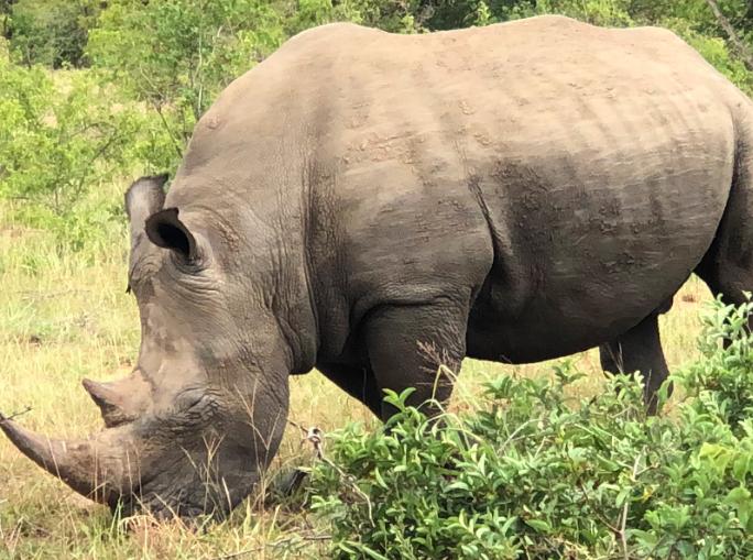 Rhino by Linda Ullah