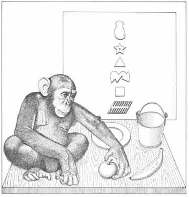 Teaching Language to an Ape
