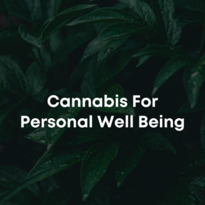 cannabis course