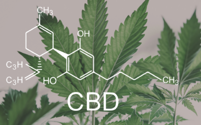 Innovating the Next Generation of CBD Products