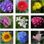Uta Kloss, Flowergarten