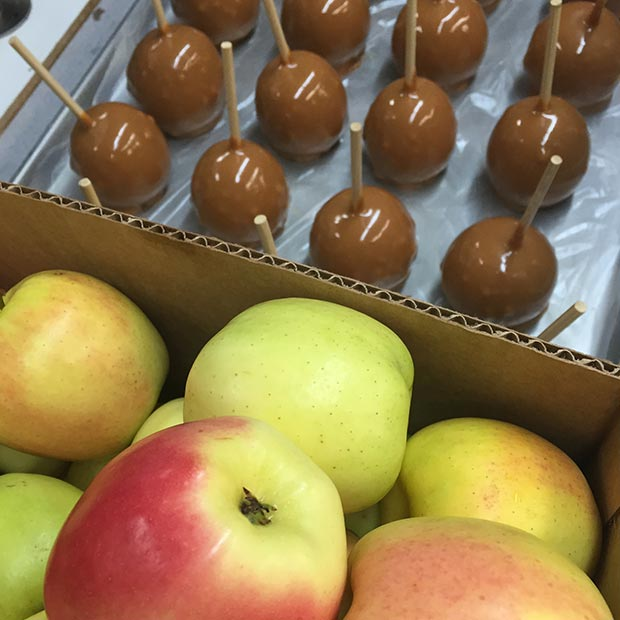 Fudge-Factory-Farm-Candy-Apples-Caramel-Apples