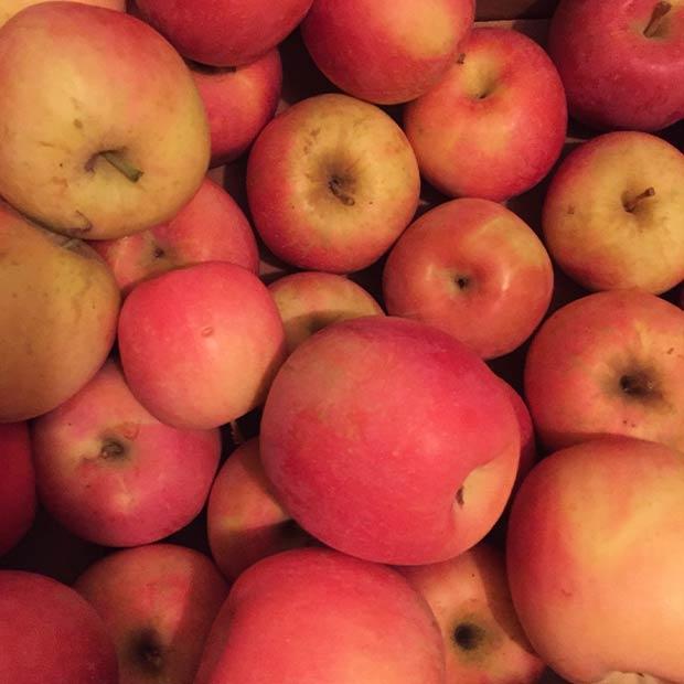 fudge-factory-fresh-fruit-001