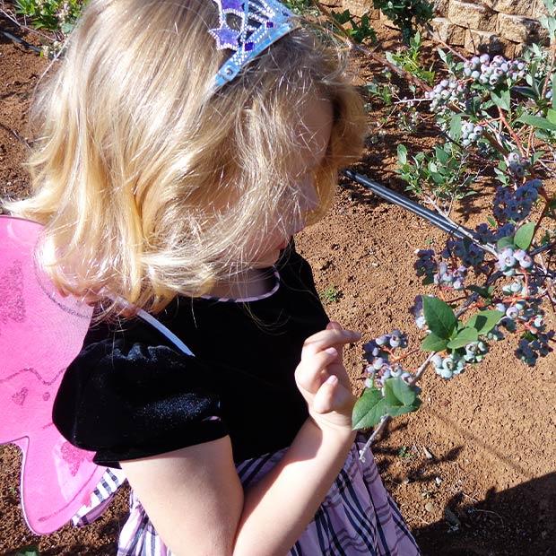 explore-fudge-factory-farm-blueberries-001