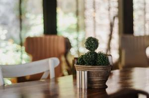 blur-cactus-chair-2350427 (1)