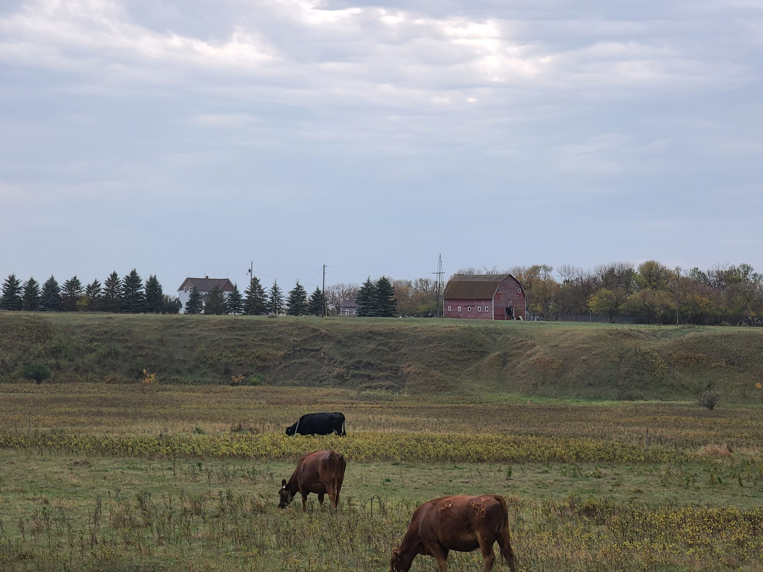 Farmhouse with almost 43 acres of land West of Bottineau!
