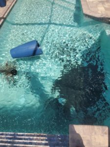 Pool Cleaning Company Cleans up after Planter Falls Into Pool