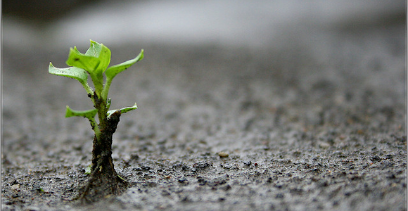 Employee Training - Planting seeds of growth