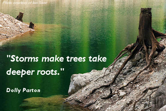 STRUGGLE CAUSES DEEPER ROOTS
