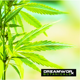 CBD Oil Manufacturing Fort Worth - How Is CBD Oil Made - How Is DreamWoRx CBD Oil Manufacturing Fort Worth Made - DreamWoRx CBD Oil