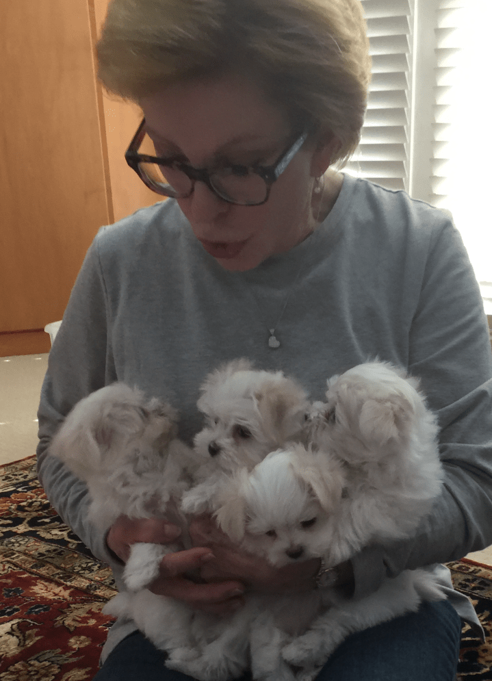 Our Maltese puppy breeder in Ohio
