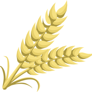 Grains And Seeds