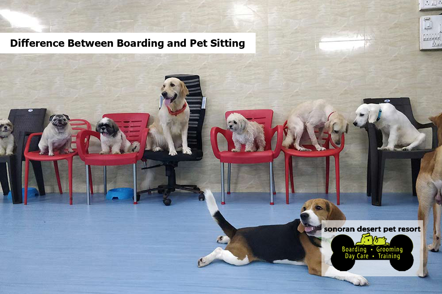 Difference Between Boarding and Pet Sitting