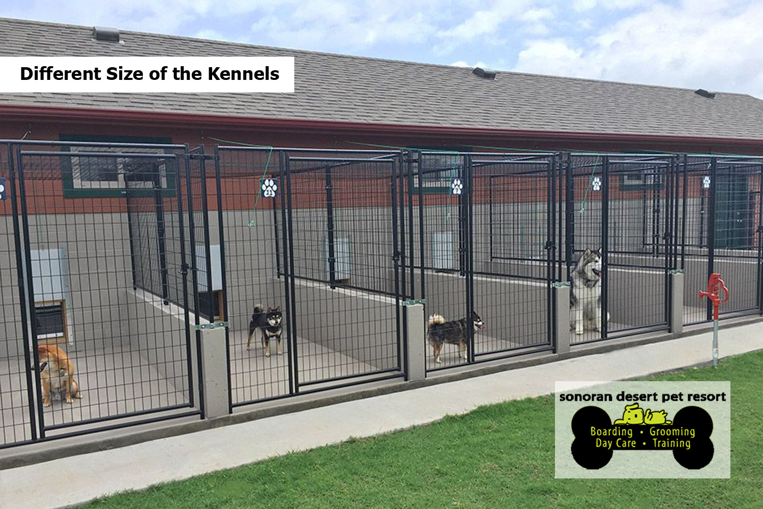 Different Size of the Kennels