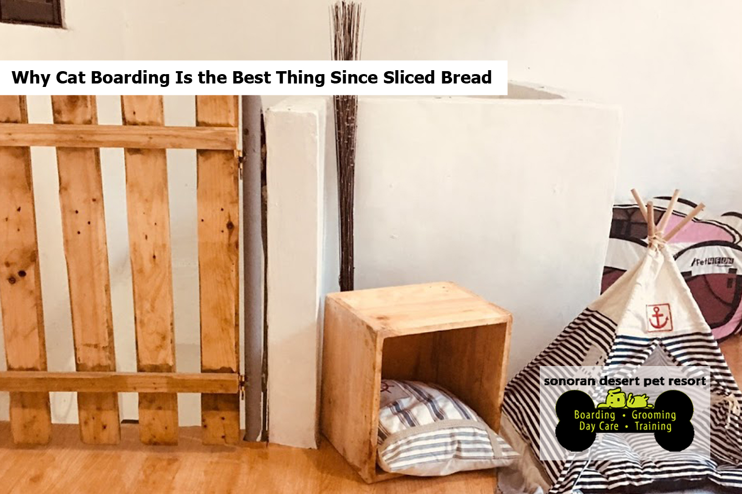 Why Cat Boarding Is the Best Thing Since Sliced Bread