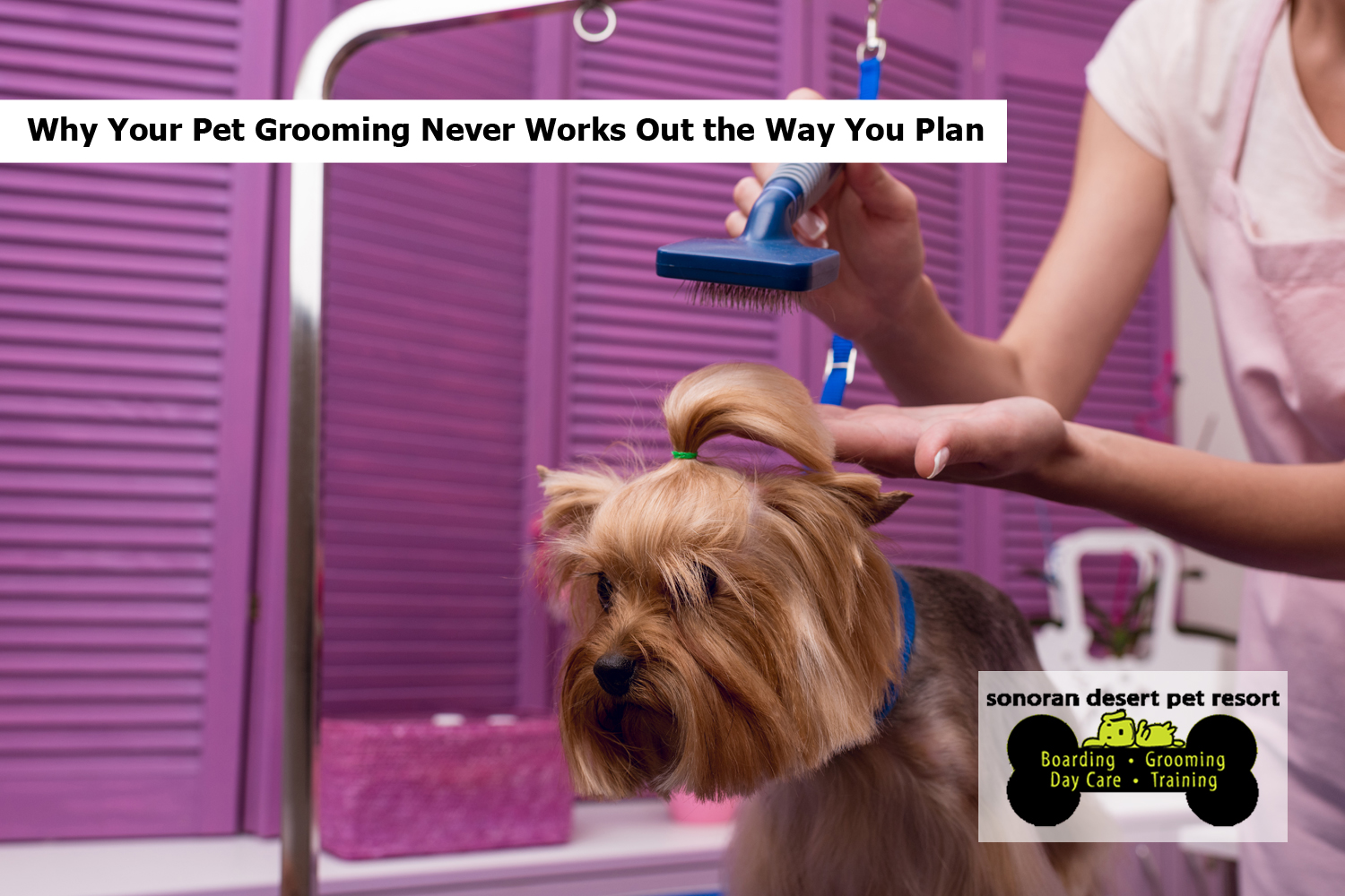 Why Your Pet Grooming Never Works Out the Way You Plan