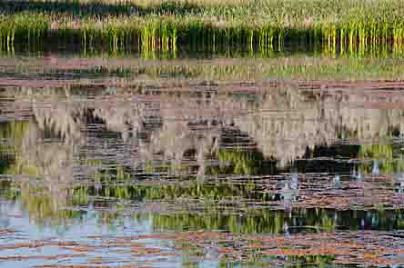 Cattails, Willows, Reflections, Walden And Sawhill Ponds Wildlife Preserve, Boulder, County, Colorado, copyright 2013 David Leland Hyde.