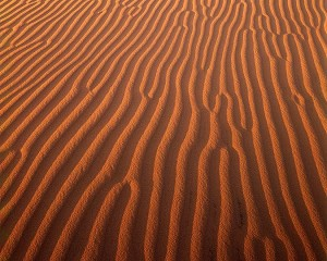 Ripples on Kelso Dunes, Mojave Desert, California, copyright 1987 Philip Hyde. From Drylands: The Deserts of North America.