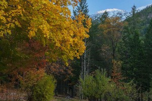 Fall Maples, Aspens, Black Oaks and Fresh Snow on Grizzly Ridge From the Garden at Rough Rock, Northern Sierra, California, copyright 2015 David Leland Hyde.