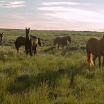 5.-DHWY-I80-558-16-Mustangs,-Hazy-Morning,-Central-Wyoming-II