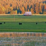 11. DHCA-ThomVly2-707-18-Snowmelt-Lake,-Cows-&-Large-Western-Barn-in-Shade,-Thompson-Valley