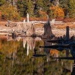 6. DHCA-LBasin4-680-18-Stumps,-Forest-and-Reflections,-Shore-of-Snag-Lake,-Fall