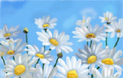 I Picked the Daisies