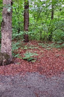 This Camper's Life: Trip to Pocomoke River State Park