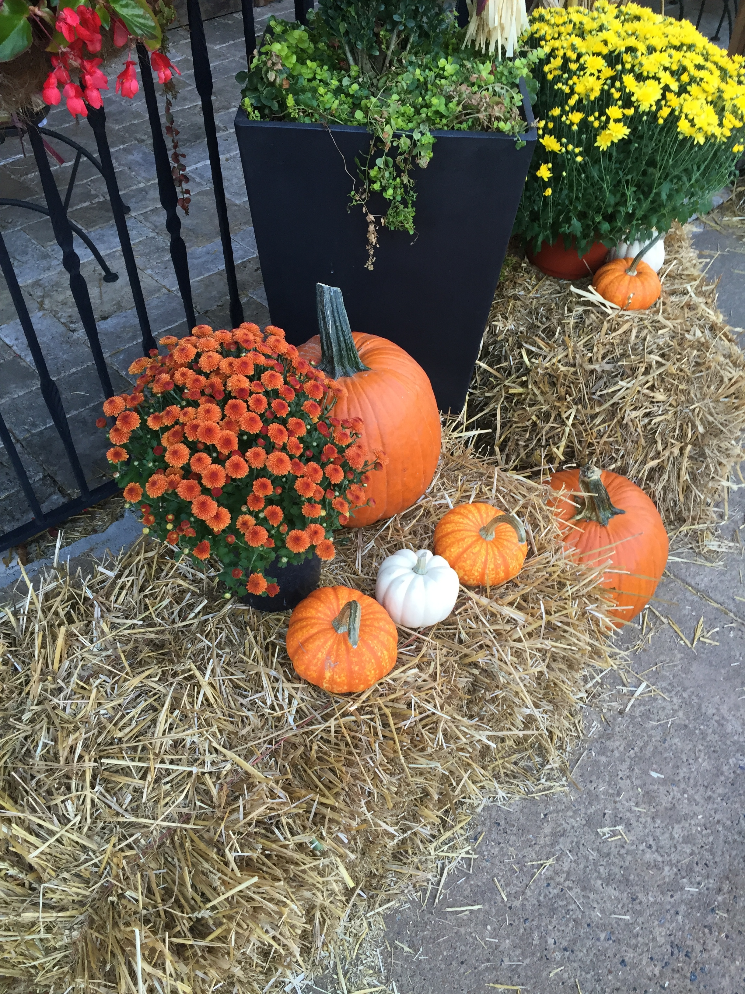 """October Breezes In Like An Old Friend """"Ode To October"""""""