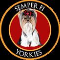 Semper Fi Yorkies