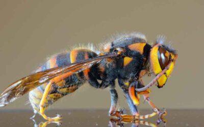 Charles Spurgeon: God's Hornets