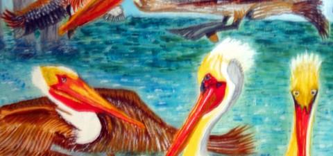 Marine Birds: Brown Pelicans