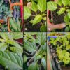 Nature's Path Hand Delivers Gardens For Good Grant