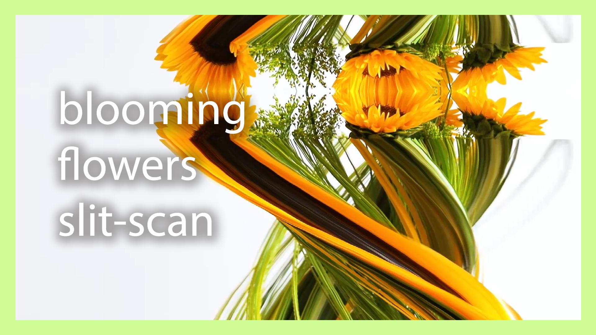 Blooming Flowers Slit Scan