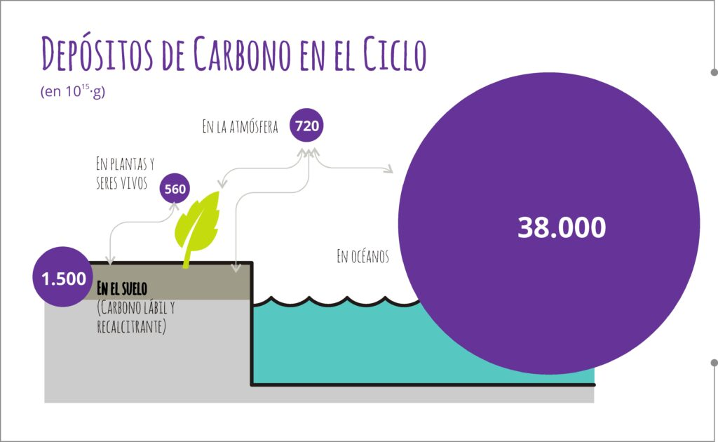 Stocks de Carbono