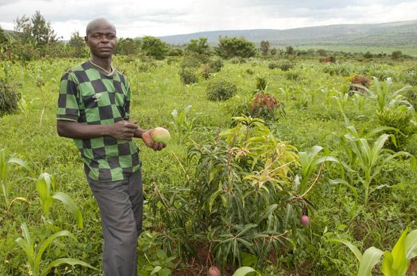 rwanda farmer in fields with mango tree_2009-11-24_225