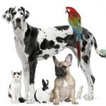 Pet Business Loans