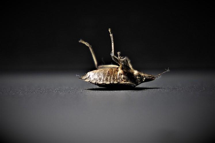 Bed Bug Control Law