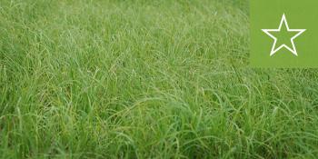 southeast-sod-argentine-bahia-grass