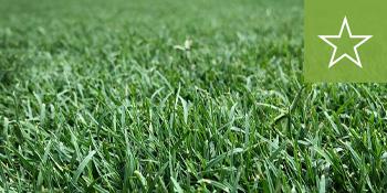 southeast-sod-celebration-bermuda-grass