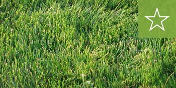 southeast-sod-empire-zoysia-grass