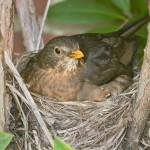 bird-nest-in-chimney