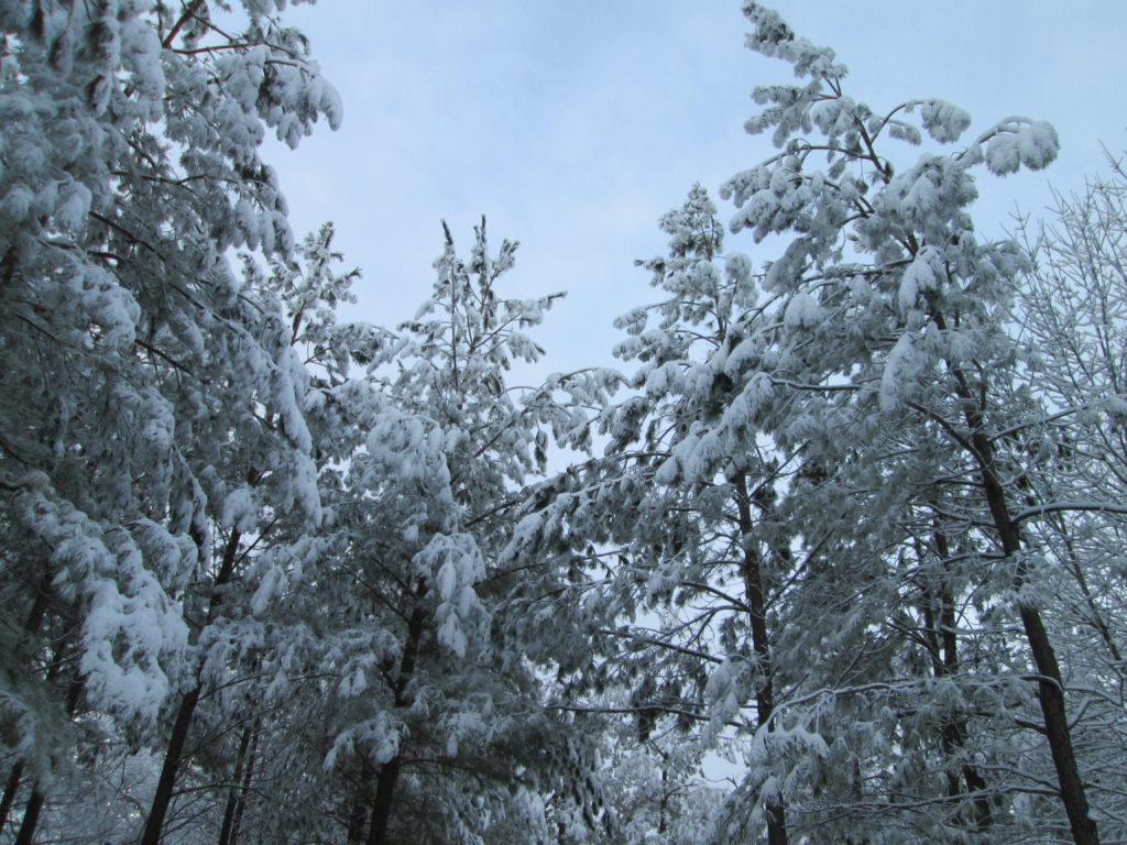 Winter2015 013