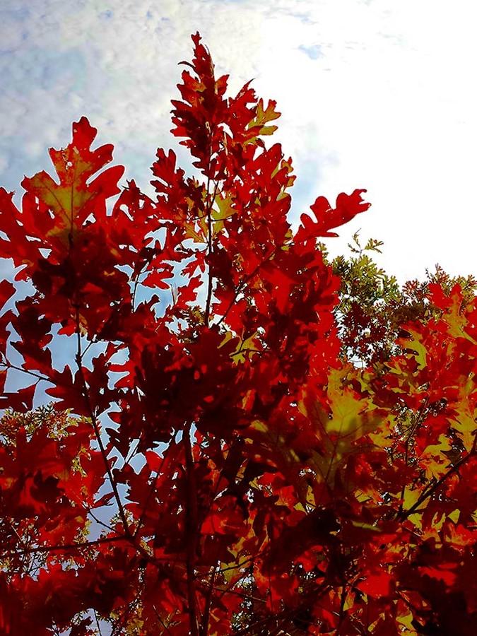 autumn_leaves2