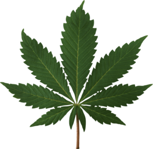 Custom insurance designed to protect businesses in the cannabis & hemp industries nationwide.