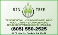 BIG TREE - Buddy Campo EP CDG 2020.jpg